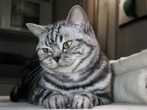Unsere süße Katzendame Bungee.